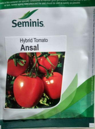 Hy Tomatao- Ansal- 3500 Seed