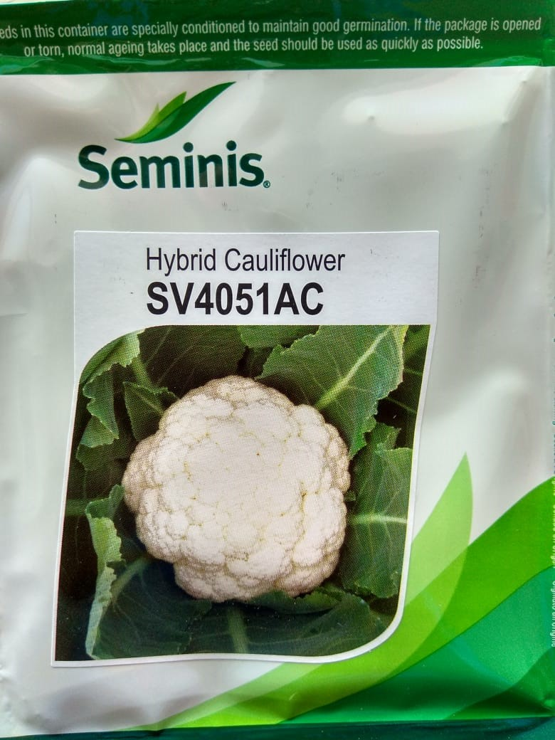 Cauliflower SV4051AC-10Gm