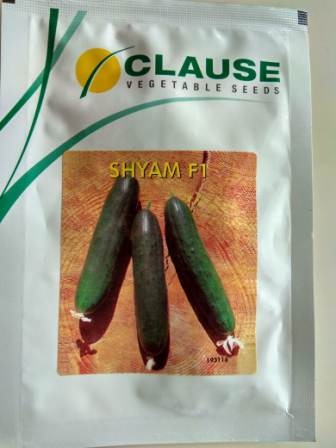 Cucumber Shyam-25gm