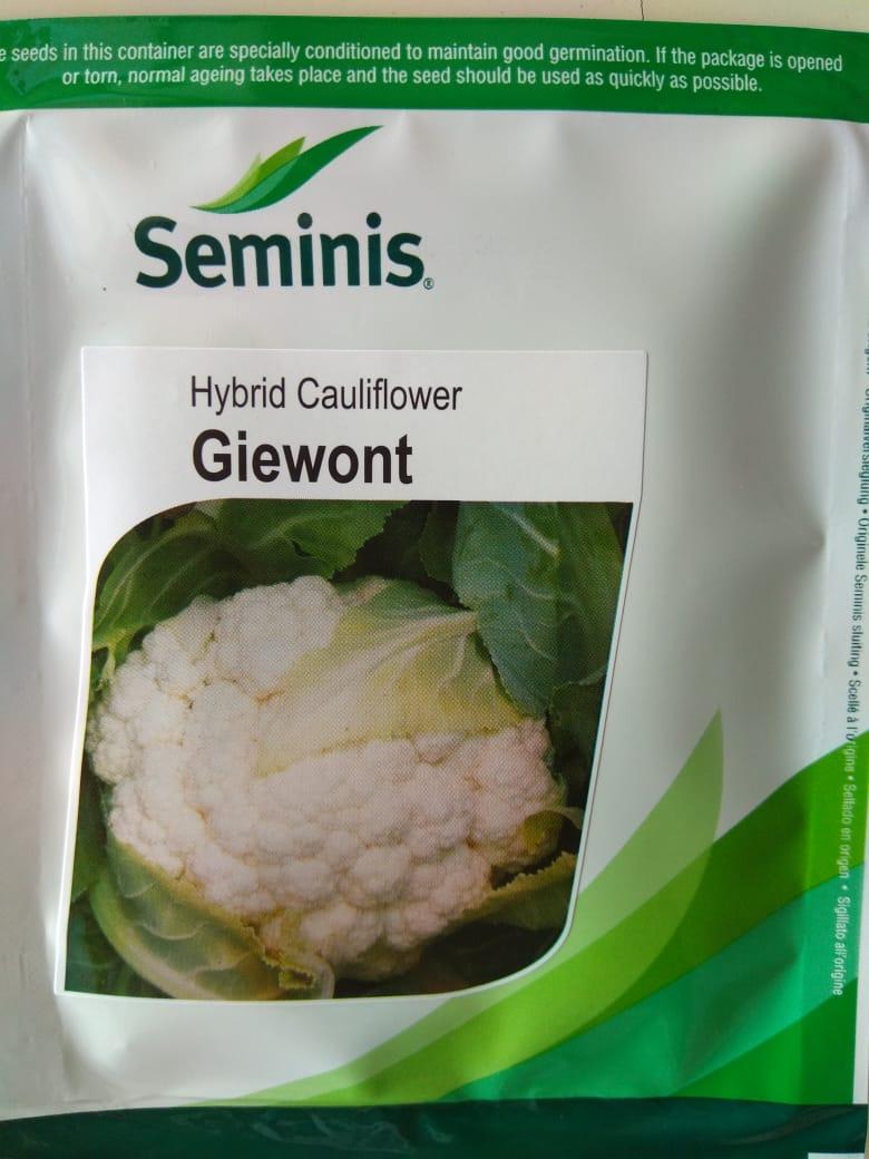 Giewont(जीवोंट)- 10gm