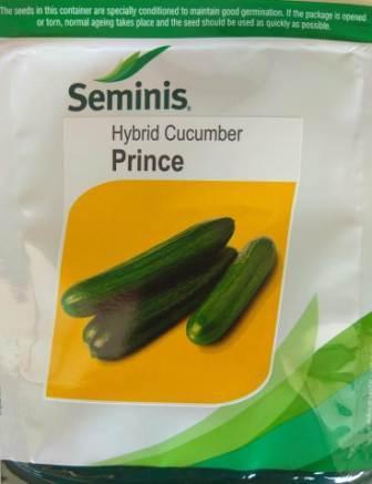 Prince (प्रिन्स)-800 Seeds