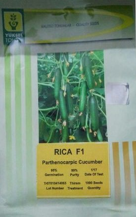 RICA- 1000 Seeds