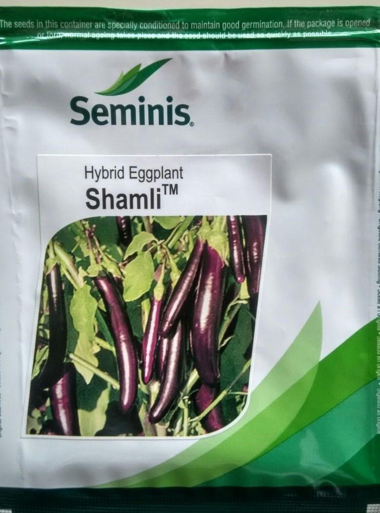 Hy Brinjal Shamli- 10gm