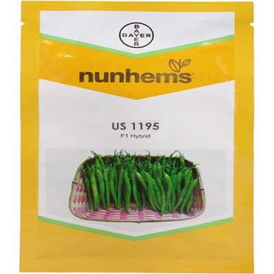 US 1195- 1500 Seeds