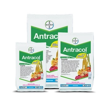Antracol- 500 gm