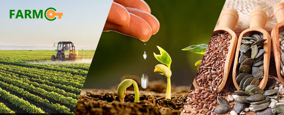Where can you Buy Quality Seeds Online in India?