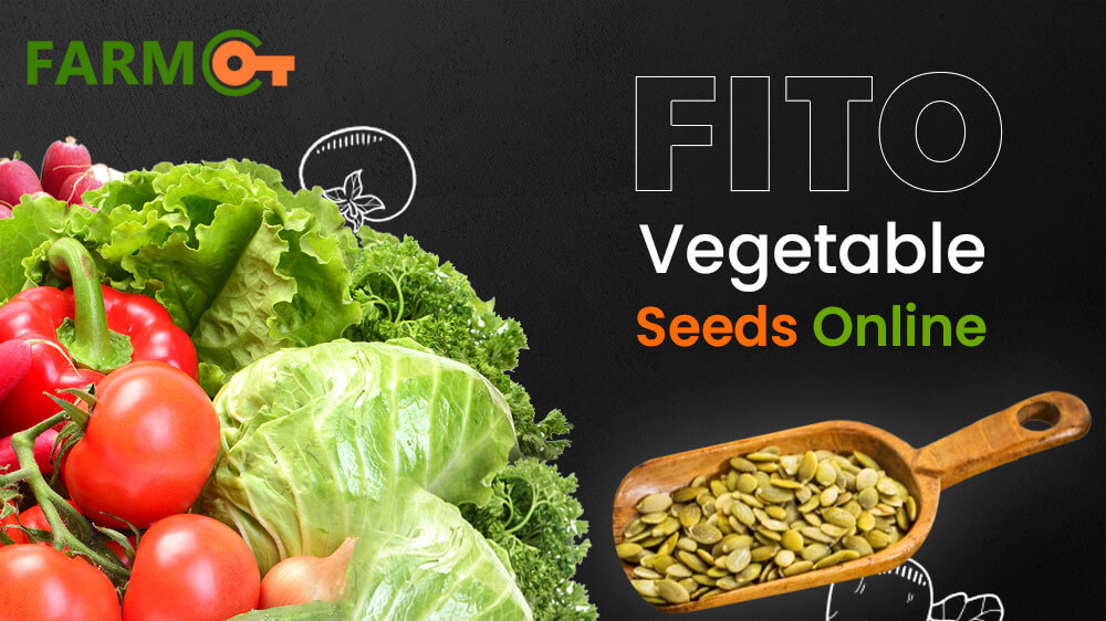Fito Vegetable Seeds Online | Fito Seeds