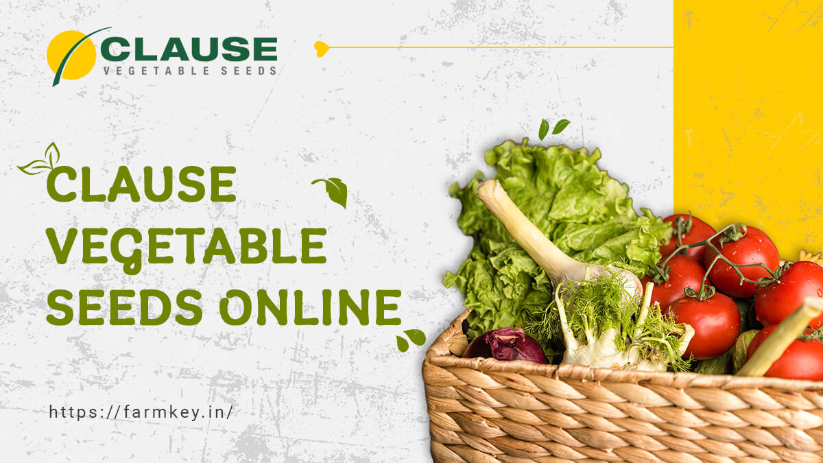 Clause Vegetable Seeds Online Store In India
