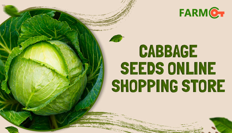 Cabbage Seeds Online Shopping Store In India