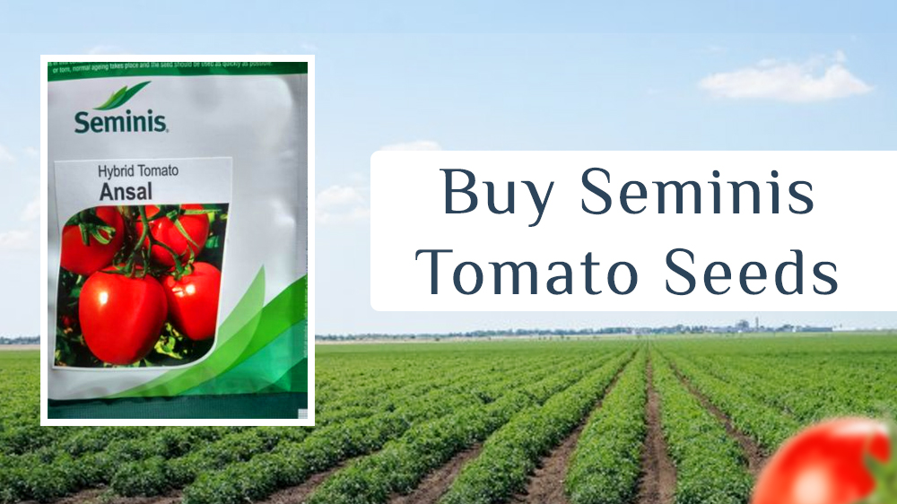 Shaping The Future Of Your Tomato's Crop With Seminis Tomato Seeds