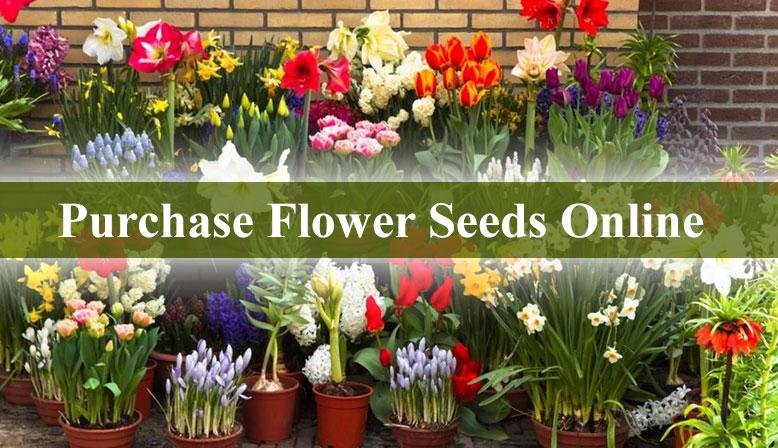 Purchase 20 Variety of Flower Seeds through Online store – Farmkey