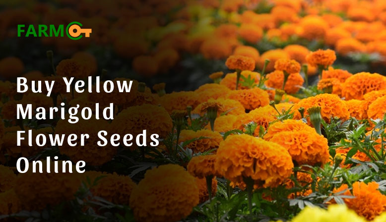 Where can I buy yellow marigold flower seeds online?