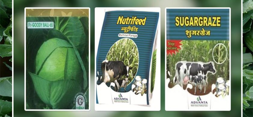 FROM WHERE CAN YOU GET THE BEST QUALITY SEEDS ONLINE?