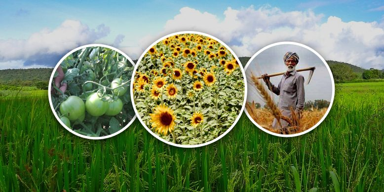 HOW DOES FARMKEY BRING ADVANTAGES FOR OUR FARMERS?