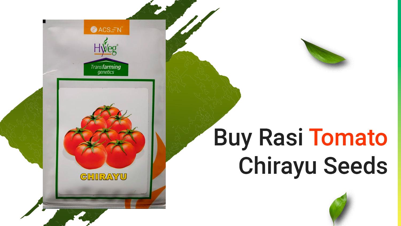 How to Buy Rasi Tomato Chirayu Seeds From Farmkey's Online Store?