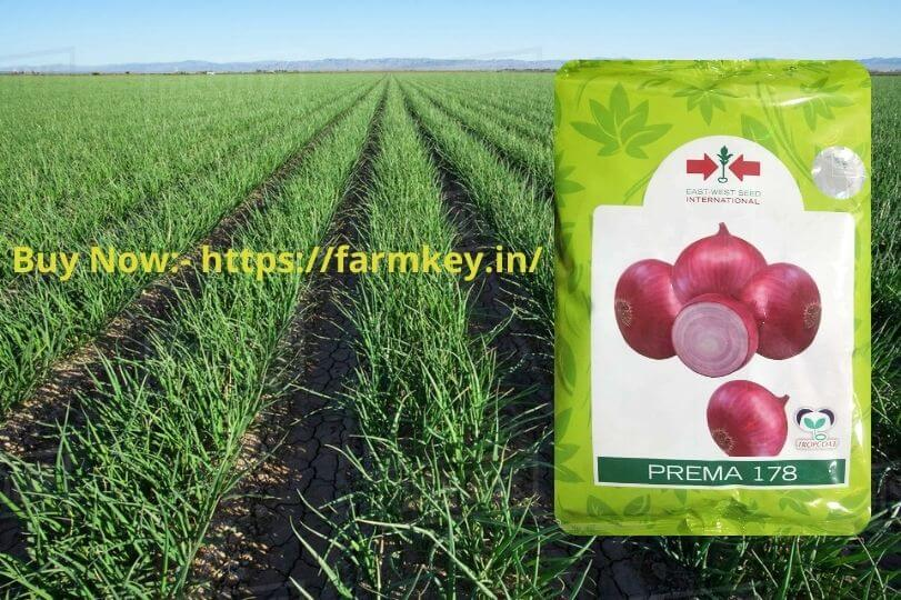 Prema 178 Onion Seeds - A New Variety Of Onion Seeds To Make A Huge Profit In This Winter Season