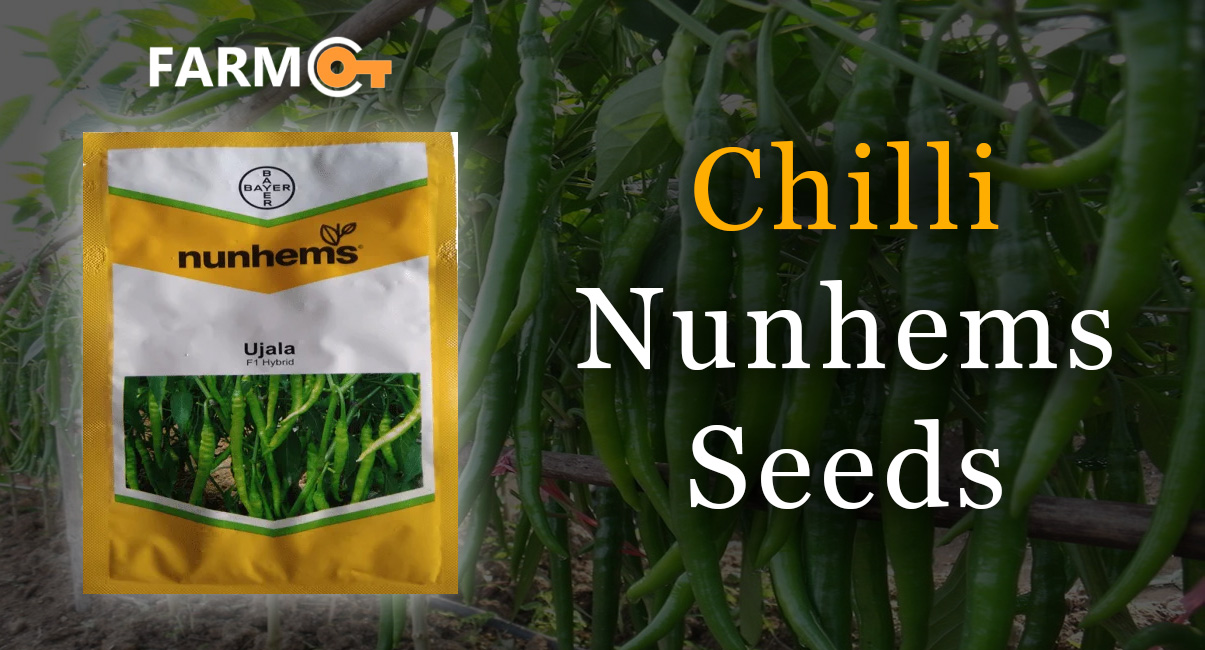 Making Farming More Profitable With Chilli Nunhems Seeds