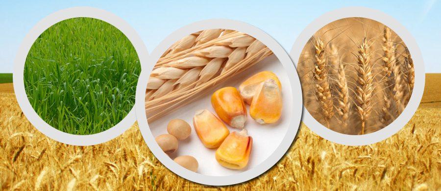 MAKE FARMING A PROFITABLE OCCUPATION WITH FARM KEY