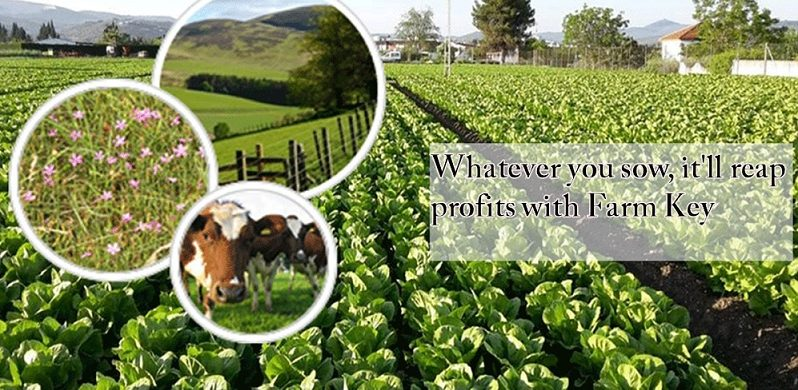 HATEVER YOU SOW, IT?LL REAP PROFITS WITH FARM KEY