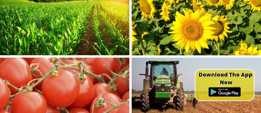 GET THE TRUE ESSENCE OF FARMING WITH EVERY PRODUCT OF FARM KEY