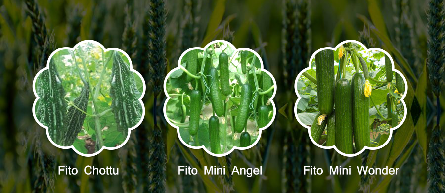 FITO GIVES YOU THE BEST SEEDS TO EXCEL IN YOUR FARMING