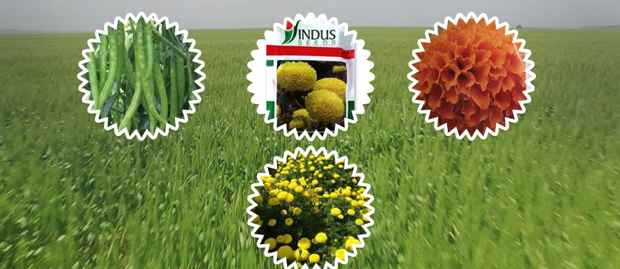 GROW THE MOST RADIANT FLOWERS AND DECENT VEGETABLES WITH INDUS