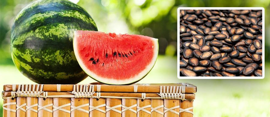 WITH QUALITY SEEDS FROM FARM KEY, GROW THE BEST WATERMELON