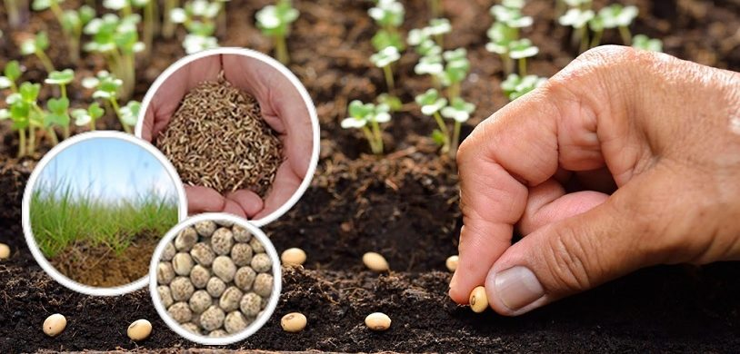 ENERGIZE YOUR FARMS WITH WORLD-CLASS SEEDS AT THE CHEAPEST PRICE