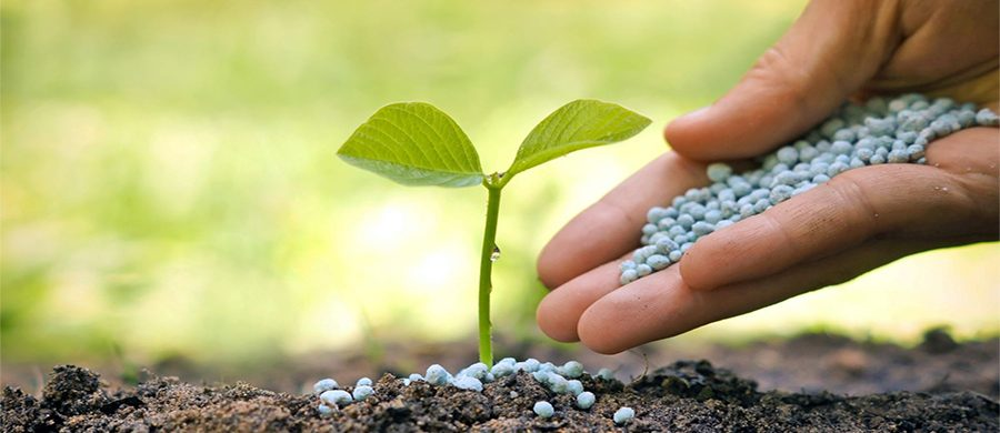 GET BEST QUALITY FERTILIZERS AND ENSURE SUPER-GROWTH IN YOUR FIELDS