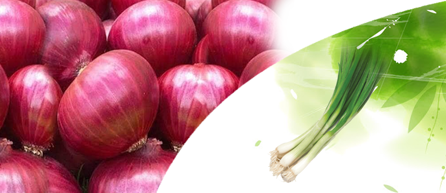 Advance Hi tech onion farming- Seed to Harvest