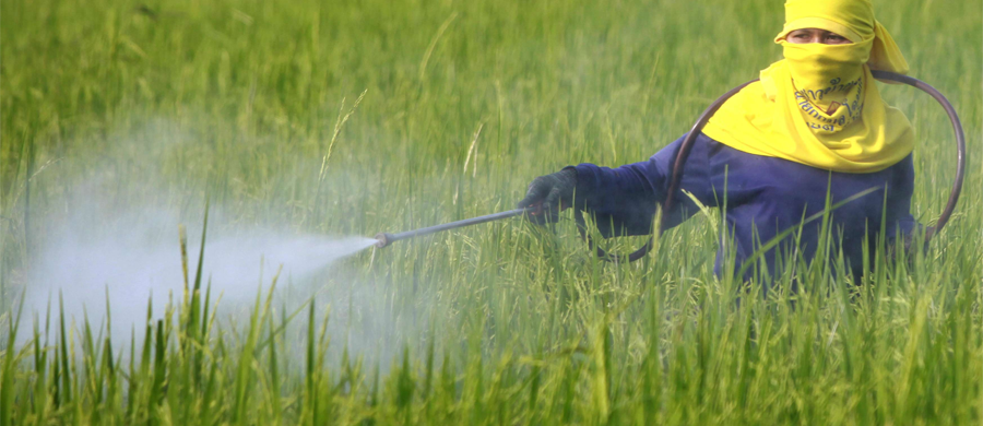 GET THE BEST INSECTICIDES TO GET RID OF VICIOUS INSECTS IN YOUR FIELD