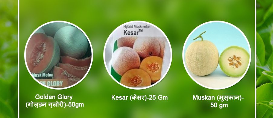 GET YOUR FIELD THE BEST MUSKMELON WITH GREAT QUALITY SEEDS