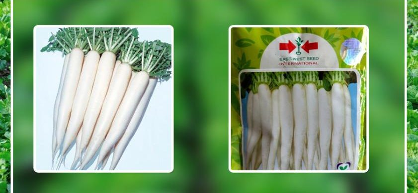 GROW THE BEST QUALITY RADISH WITH FARM KEY EVERY YEAR