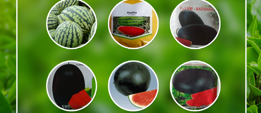 GET THE GREAT VARIETY AND QUALITY OF WATERMELON WITH FARM KEY