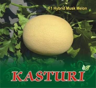 Kasturi (कस्तूरी)- 50 Gm