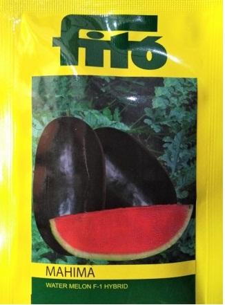 Mahima(महिमा)- 1000 Seeds