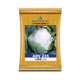 ADV 235 Cauliflower - 10 gm