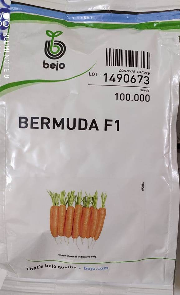 uploads/product/Bermuda.jpg