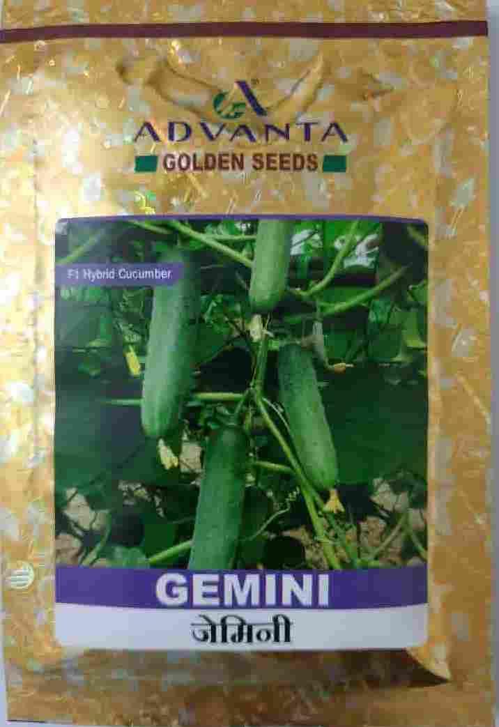 Advanta Cucumber Gemini - 25 gm