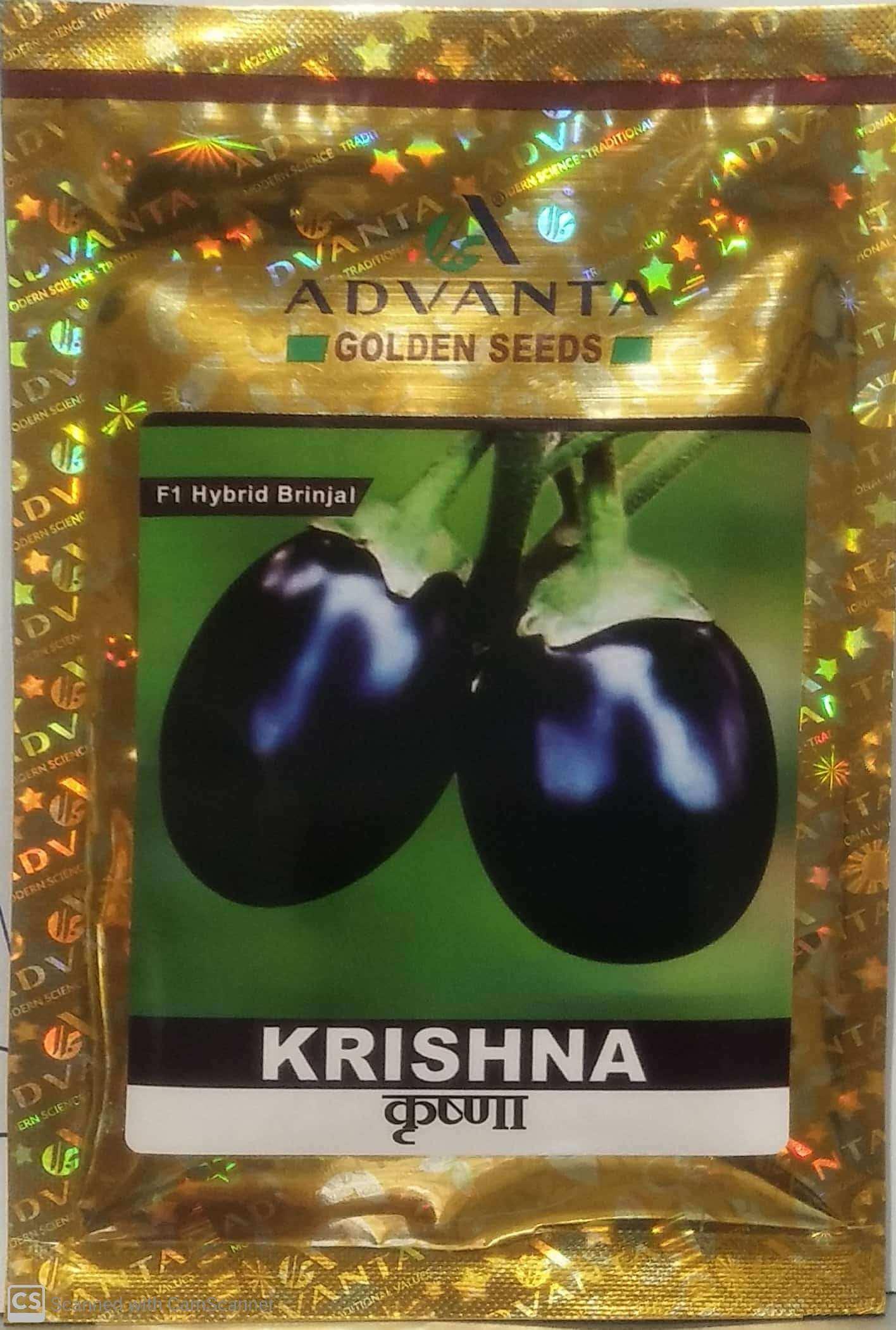 Advanta Brinjal Krishna - 10 gm