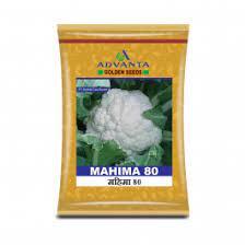 Mahima 80 Cauliflower - 10gm