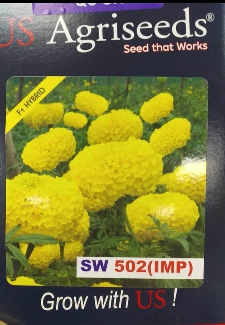 Marigold SW 502 (Imp) - 1000sds