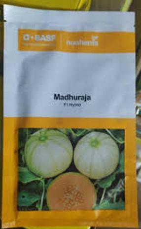 Madhuraja- 1000 Seeds