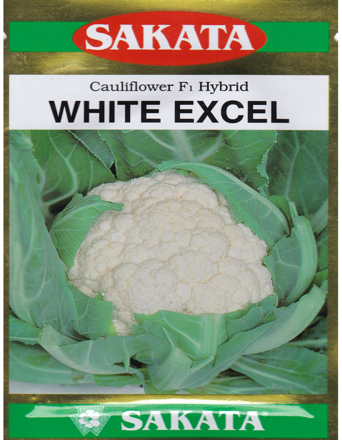 White Excel- 10gm