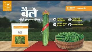 Cucumber Belle -1000 Sds