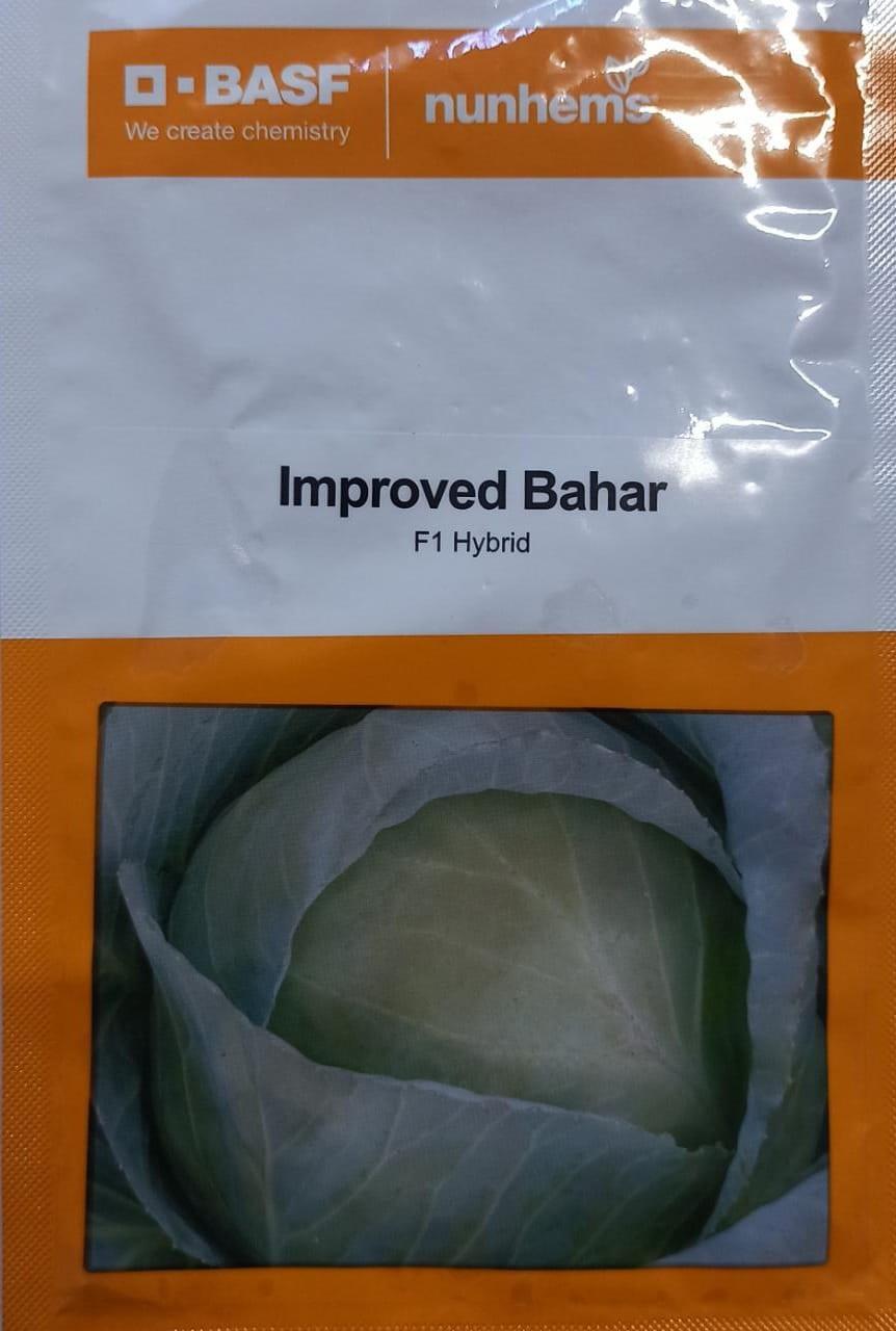 Improved Bahar-2000 seeds