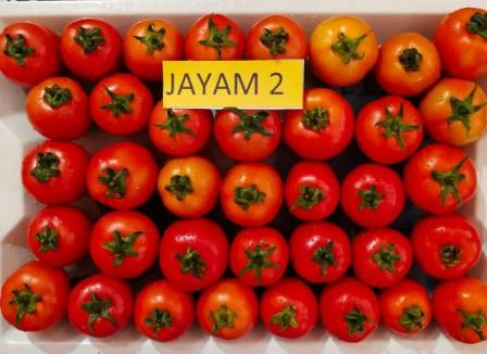 uploads/product/jayam21.jpg