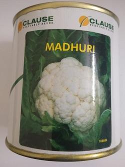 Clause Madhuri- 100 Gm