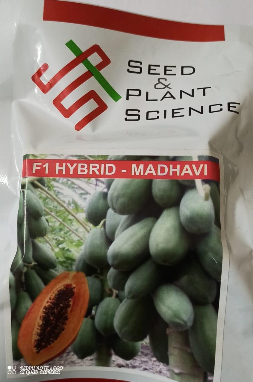 Madhavi - 25 seed