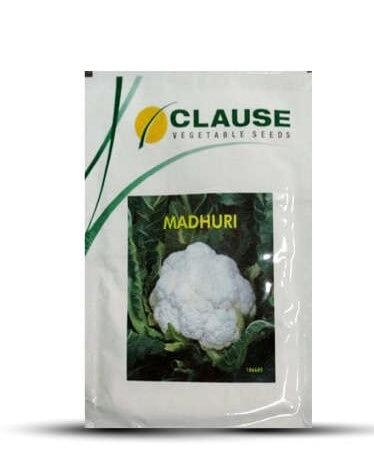 Clause Madhuri- 25 Gm